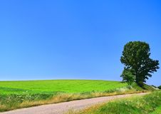 Malerische Landstraße und einsamer Baum Stockbilder