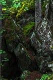 Malerische schwarze Steine unter grünem Moos im Wald lizenzfreies stockfoto
