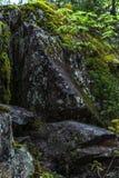 Malerische schwarze Steine unter grünem Moos im Wald Stockfotografie