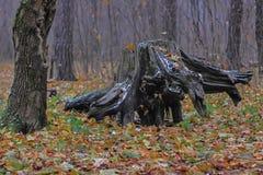 Malerischer Baumstumpf im Wald Stockfotos