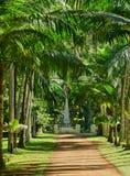 Malerischer Garten von Pamplemousse in Mauritius Republic Lizenzfreies Stockbild