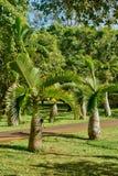 Malerischer Garten von Pamplemousse in Mauritius Republic Lizenzfreie Stockbilder