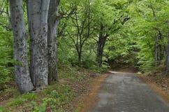 Malerischer Wald und Straße Lizenzfreie Stockbilder