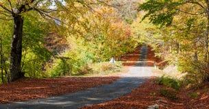 Malerischer Weg des Herbstes Lizenzfreie Stockfotos