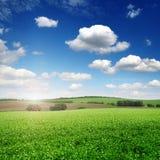 Malerisches Erbsenfeld und blauer Himmel Lizenzfreies Stockbild