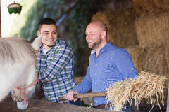 Males giving hat to horse. Two adult positive males giving hat to horse at barn and smiling Royalty Free Stock Photo