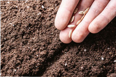 Males hand planting seeds Royalty Free Stock Photos