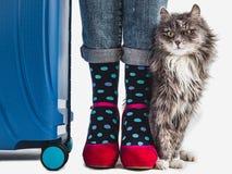 Maleta elegante, las piernas de las mujeres y gatito apacible fotos de archivo