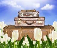 Maletas que viajan en un campo del tulipán Foto de archivo libre de regalías