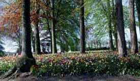 Maleza de millares de tulipanes fotografía de archivo libre de regalías