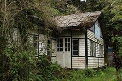 Malezyjska dżungla odzyskuje ich domenę w Fraser wzgórzu obrazy stock