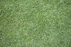 Malezyjska trawa Obraz Stock