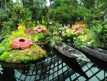 Malezyjski las Obrazy Royalty Free