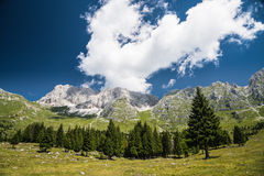 Malga del Montasio. View of trees and mountains from trail of Malga del Montasio in a sunny day with clouds Stock Photography