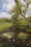 Malham Beck at Malham Cove. Yorkshire Dales National Park, England Stock Images