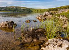Malham tarn. Looking beautiuful on a summers evening, Malham, Yorkshire, UK Royalty Free Stock Image
