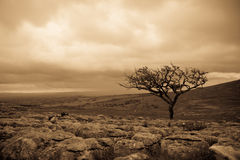 Malhamdale. Late evening above Malham Cove in the Yorkshire Dales, England Stock Photography