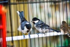 Mali śliczni ptaki w klatce cieszy się ranku wschód słońca zdjęcia royalty free