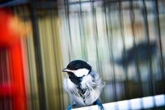 Mali śliczni ptaki w klatce cieszy się ranku wschód słońca obrazy stock