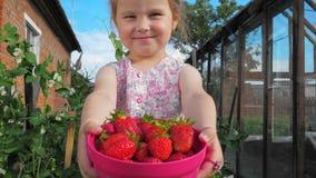 Mali śliczni piękni dziewczyna chwyty na szeroko rozpościerać rękach zbiornik z truskawkami zbiory
