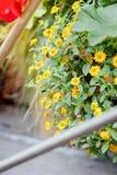 Mali żółci kwiaty na ogródzie jako krajobrazowi projektów elementy Zdjęcia Stock