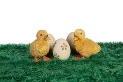 Mali żółci Wielkanocni kaczątka Obrazy Stock