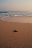Mali żółwie popiera ocean Obraz Stock