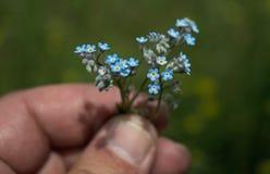 Mali błękitów kwiaty trzymający w ręce obraz stock