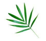 Mali bambusów liście odizolowywający Zdjęcie Stock