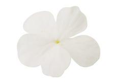 Mali biali kwiaty Zdjęcie Royalty Free