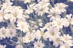 Mali Biali kwiaty Obraz Stock