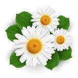 Mali biali kwiaty odizolowywający Zdjęcie Royalty Free