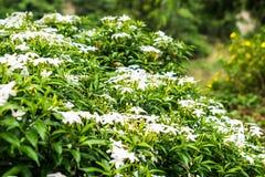 Mali biali kwiaty z bujny zieleni krzakami zdjęcie stock