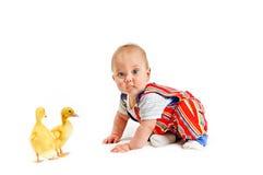 mali chłopiec kaczątka Obraz Stock