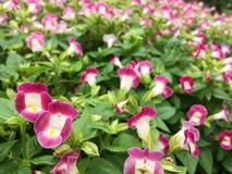 Mali cutie kwiaty Zdjęcia Stock
