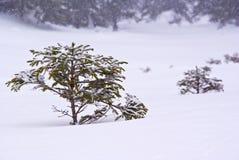 mali drzewa Obrazy Royalty Free