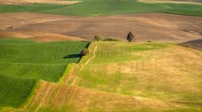 Mali drzewa kropkują Palouse krajobraz Fotografia Stock