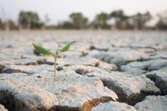 Mali drzewa na suszy ziemi Obraz Royalty Free