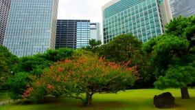Mali drzewa otaczający wielkimi budynkami biurowymi Wielki i atrakcyjny krajobrazu ogród w Tokio Hamarikyu ogródy, Japonia zdjęcia stock