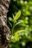 Mały drzew rosnąć Obrazy Royalty Free