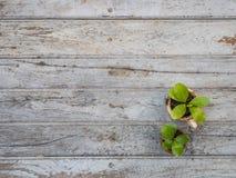 Mali drzewa z garnkiem przy drewnianym tłem Obrazy Stock