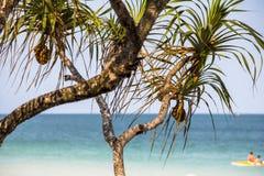 Mali drzewka palmowe na Phu Quoc wyspie Zdjęcia Royalty Free