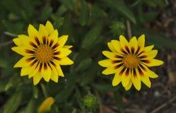 Mali dzicy kolorów żółtych kwiaty obraz royalty free