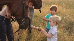 Mali dzieci karmią koniom jabłka w polu zbiory