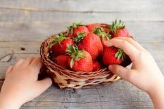 Mali dziecko wp8lywy przerzedżą truskawki od łozinowego kosza Żartuje zdrowego jedzenie Dojrzałe czerwone truskawki w łozinowym k Zdjęcie Royalty Free