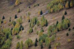 Mali jedlinowi drzewa Obraz Royalty Free