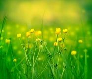 Mali kolorów żółtych kwiaty Zdjęcia Royalty Free