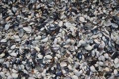 Mali kolorowi seashells Obraz Stock
