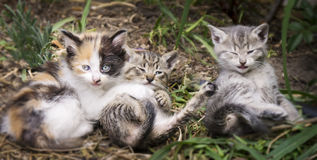 Mali koty Zdjęcie Royalty Free