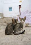 Mali koty żyje swobodnie na ulicach Tetouan, Maroko Obraz Stock